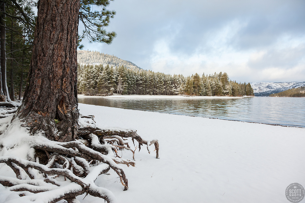 """Snowy Roots at Donner Lake 1"" - These snow covered pine tree roots were photographed at the East shore of Donner Lake, right after a Spring snow shower."