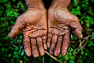 An old soybean and peanut farmer shows his worn, wrinkled, dirty hands, Hanoi, Vietnam, Southeast Asia