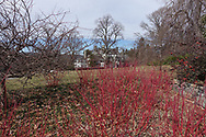 Red shrubbery on the grounds of Wave Hill in Riverdale, New York