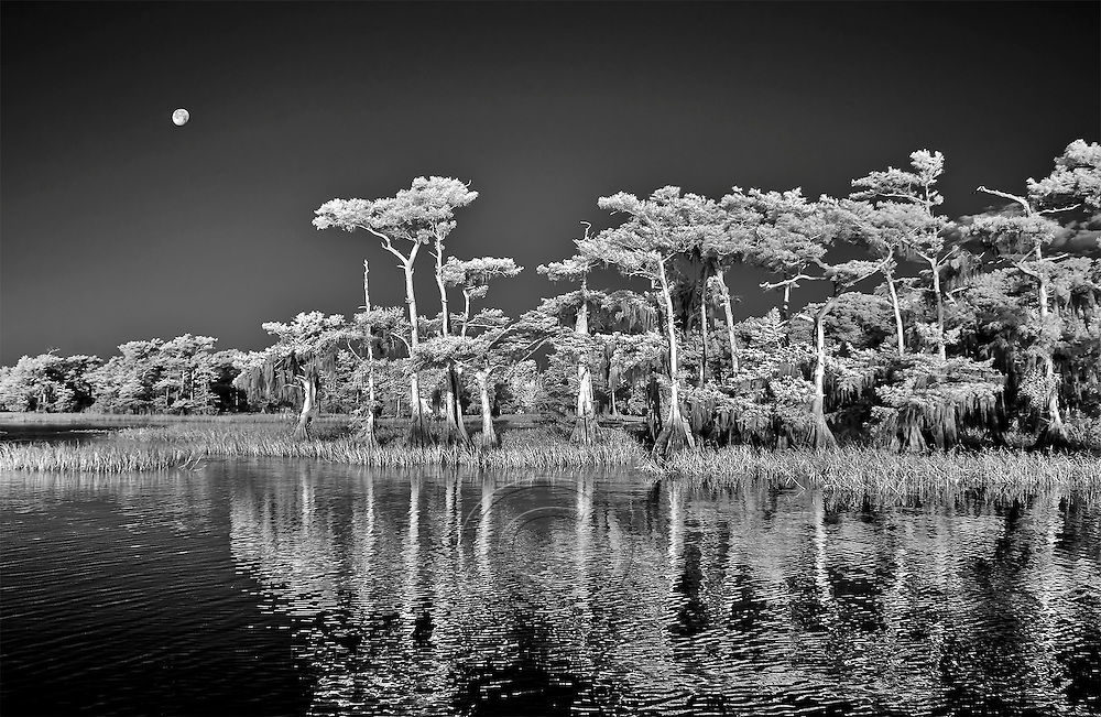 Infrared photo of Blue Cypress Lake with moon
