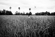 A young boy flies a small plastic kite in a grassy field in a village outside Yangon, Myanmar.