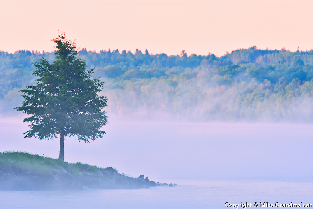 Tree and fog on the Saint John River, Mactaquac Provincial Park, New Brunswick, Canada<br />