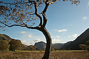 Fleetwith Pike and Honester Pass from Crummock Water, Lake District, Cumbria, UK