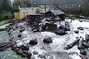Dierenpark Amersfoort in de winter.<br /> <br /> Op de foto: