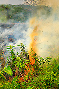 """09 APRIL 2013 - KHUNTAN, LAMPHUN, THAILAND:  A grassfire set by people who wanted to burn out weeds and dead grass from a road side burns in Khuntan, Lamphun province, Thailand. The """"burning season,"""" which roughly goes from late February to late April, is when farmers in northern Thailand burn the dead grass and last year's stubble out of their fields. The burning creates clouds of smoke that causes breathing problems, reduces visibility and contributes to global warming. The Thai government has banned the burning and is making an effort to control it, but the farmers think it replenishes their soil (they use the ash as fertilizer) and it's cheaper than ploughing the weeds under.     PHOTO BY JACK KURTZ"""