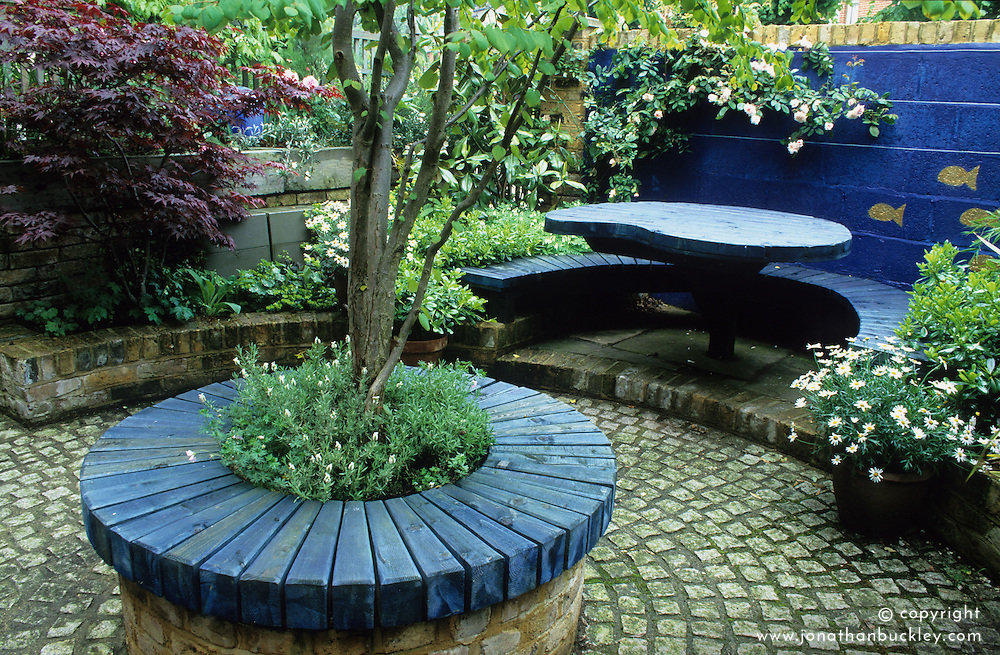 The paved front garden. Seating areas around base of tree and in front of decorative blue wall. Central tree is a Cercidiphyllum japonicum