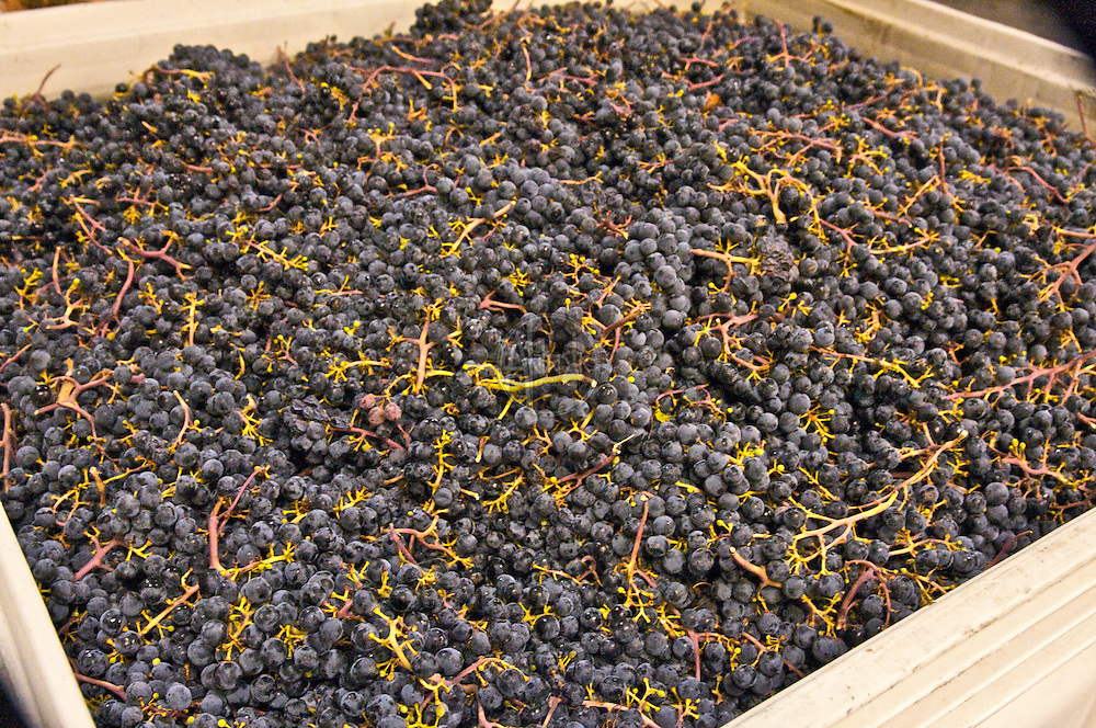 Brian Carter Cellars Grape Crush 2009 Woodinville, WA