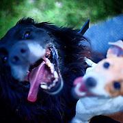 Discussion solved. #lysa #lysanadlabem #dog #dogs #czechrepublic #prag #praha #prague #garden #lastsummerdays