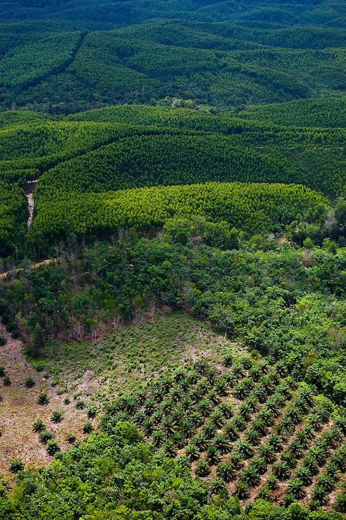 Eucaliptus plantations east of Pekanbaru, Sumatra, Indonesia..Daniel Beltra/Greenpeace