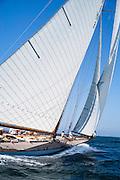 Spartan sailing in the Nantucket Opera House Cup regatta