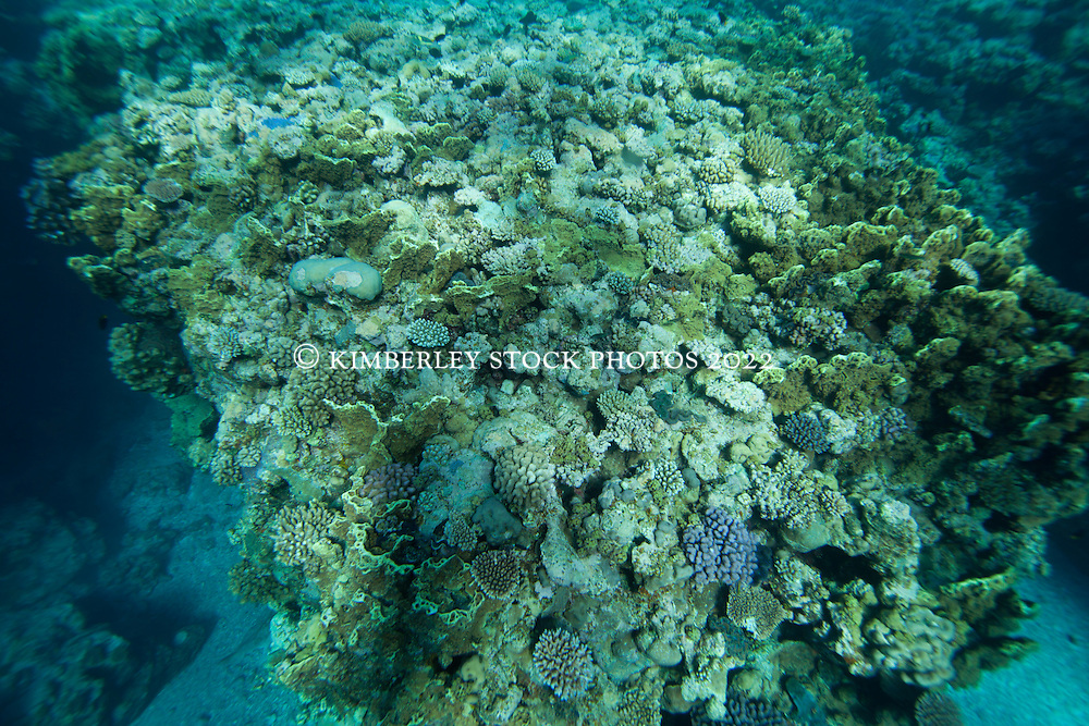 A divesity of corals at Clerke Reef at the Rowley Shoals.