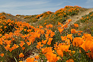 Lancaster Poppy Preserve, Antelope Valley, California