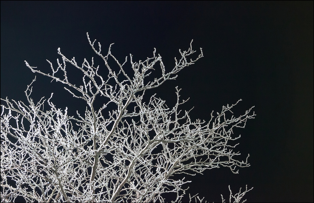 Coating of ice on a bare tree creates a monochromatic scene at night in Springfield, Illinois.