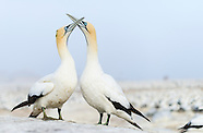Lamberts Bay & Bird Island
