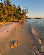 A piece of coral on the Picnic Key beach lights up in the evening sunlight. This was one of many small islands in the Ten Thousand Islands Unit of Everglades National Park.<br /> <br /> Date Taken: 12/13/2014