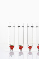Tomatoes in test tubes