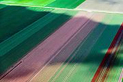 Nederland, Flevoland, Zeewolde, 07-05-2015; Zuidelijk Flevoland, Zuidlob, machinale oogst bloembollen. Bloembollenvelden met tulpen en hyacinten.<br /> Southern Flevoland, mechanical harvesting bulbs. Bulb fields of tulips and hyacinths.<br /> luchtfoto (toeslag op standard tarieven);<br /> aerial photo (additional fee required);<br /> copyright foto/photo Siebe Swart