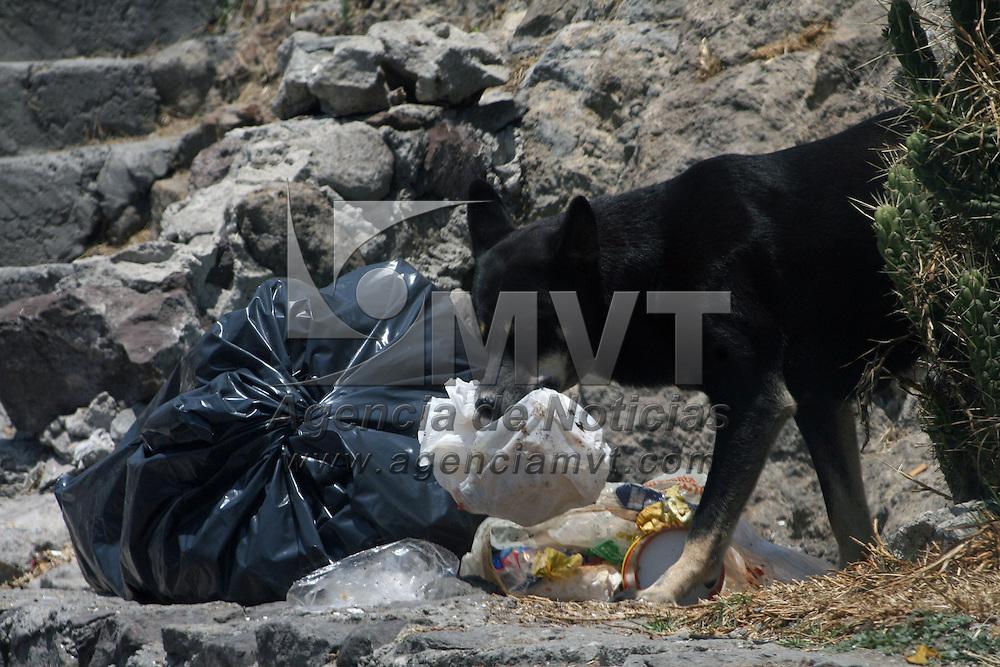 TOLUCA, Mexico.- En el Paseo Matlazincas, se observan tiraderos de basura, donde los perros aprovechan para buscar comida la cual provoca un foco de infección en esta zona. Agencia MVT. José Hernández.  (DIGITAL)