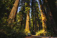 Holland Hill Rd, Jedediah Smith Redwoods