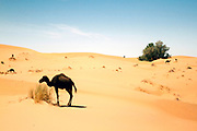 Landscape of the Erg Chebbi region of the Moroccan Sahara desert, near Merzouga, Southern Morocco, 2014-04-03. <br />
