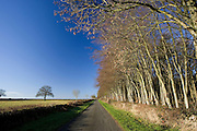 Empty country lane beside field in The Cotswolds, near Burford, Oxfordshire, United Kingdom