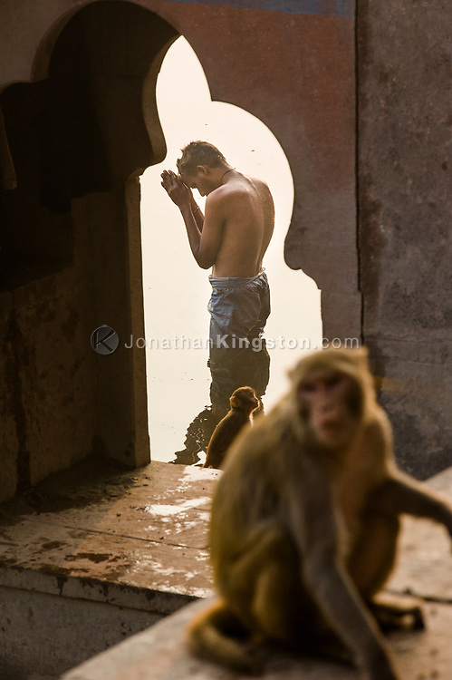 Hindu devotee praying in the Yamuna river, Mathura, India.