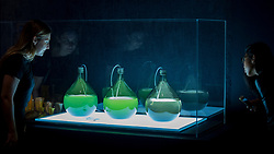 "© Licensed to London News Pictures. 11/09/2018. LONDON, UK. Visitors view ""Algae Lab"", designed by Studio Klarenbeek & Dros at Atelier Luma, a factory line that 3D prints in algae, at a preview of the 87 nominees for the eleventh Beazley Designs of the Year exhibition and awards at the Design Museum in Kensington.  The exhibition runs 12 September to 6 January 2019 and celebrates the most innovative designs of the last year.  Photo credit: Stephen Chung/LNP"