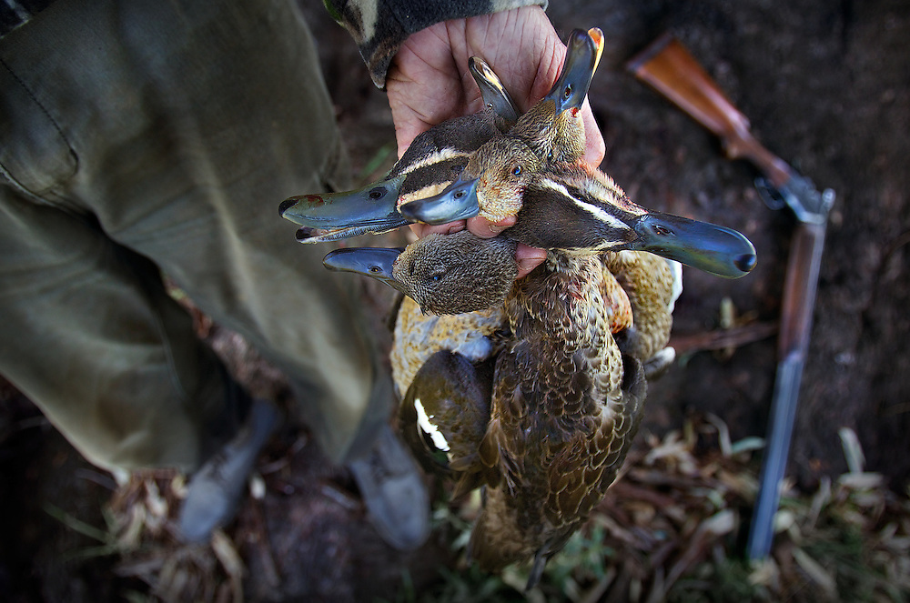 Collin Wood. Duck hunting season opens near Howlong on the Murray River. Pic By Craig Sillitoe CSZ/The Sunday Age 10/3/2011 This photograph can be used for non commercial uses with attribution. Credit: Craig Sillitoe Photography / http://www.csillitoe.com<br />