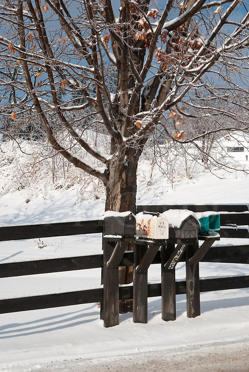 Rural delivery mailboxes in winter snow under an oak tree caked in ice.
