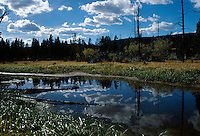 Marsh reflecting clouds and lodgepole pines, Yellowstone National Park, WY
