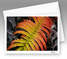 Nature wildlife and landscape note cards