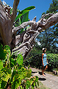 Girl explores Strawberry Hill Gardens - Jamaica