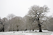 Man walks dog on winter's day across snow-covered Hampstead Heath, North London, England, United Kingdom