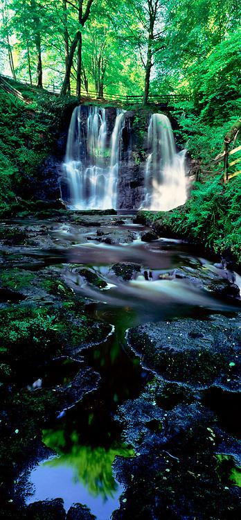 Photographer: Chris Hill, Glenariff Forest Park, Glens, County Antrim