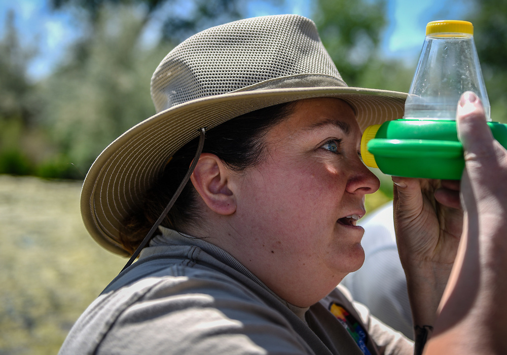 rer050817f/NM&amp;West/May 8, 2017/Albuquerque Journal<br /> recent graduates of the Rio Grande Nature Center&rsquo;s volunteer program began training at the discovery pond on how to best teach student of all ages how to identify aquatic micro invertebrates including species such as larva that eventually turns into a dragonfly, and  tadpoles. Pictured is instructional coordinator Heather McCurdy(Cq)taking a closer look at species collected from the discovery pond.<br /> Roberto E. Rosales/Albuquerque Journal