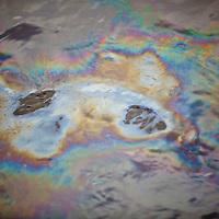 Oil Sheen in water at Liberty Park, Salt Lake City