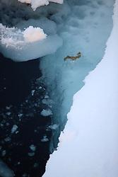 ATLANTIC OCEAN ABOARD ARCTIC SUNRISE 31MAY11 - Arctic sea ice in the Labrador Sea seen from aboard the Greenpeace Ship Arctic Sunrise...jre/Photo by Jiri Rezac / Greenpeace