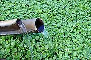 Nederland, Ubbergen, 25-8-2012Waterkerskwekerij de Klispoel aan de voet van de stuwwal bij Nijmegen.Voor het kweken van deze bladgroente is veel en schoon water nodig. Dit krijgt het bedrijf, wat veel aan AH,Albert Heijn levert, via de matuurlijke bronnen en beekjes die vanuit de heuvel naar beneden stromen, veel ook ondergronds. Ook vanuit grote diepte wordt water opgepompt.Foto: Flip Franssen/Hollandse Hoogte
