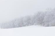 Winter woodland on a foggy, frosty morning