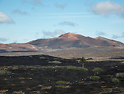 Grapevines growing in black volcanic soil in protected enclosed pits, La Geria, Lanzarote, Canary Islands, Spain distant view of Timanfaya volcano