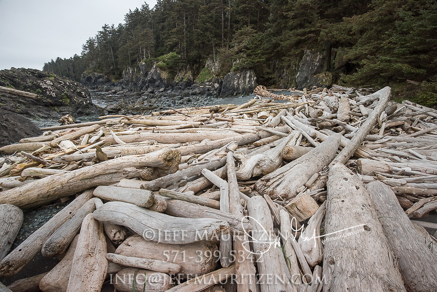 Driftwood along a rocky beach on SGang Gwaii, Haida Gwaii, British Columbia, Canada.
