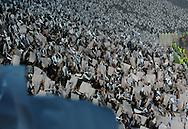 FUDBAL, BEOGRAD, 03. Nov. 2010. - Koreografija navijaca Partizana. Utakmica 4. kola Lige sampiona grupe H izmedju Partizana i Brage / Partizan vs SC Braga UEFA Champions League Group H.. Foto: Nenad Negovanovic