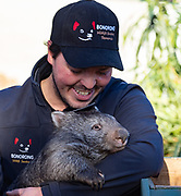 One of the keepers at the Sanctuary with a resident wombat -