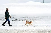 A man walks his dog down a street in Hirafu, Hokkaido in northern Japan on Feb. 7 2010. Niseko enjoys some 15 meters of snowfall per annum.