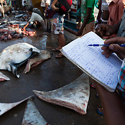 Manta rays for sale at the morning fish market in Mirissa, Sri Lanka. Many mantas and mobula rays are landed each day at this small port, primarily to supply the growing gill raker trade, which is targeting rays around the world to supply powders and potions to consumers in Asia who believe that gill rakers have medicinal powers.