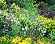Blooming Iris Garden