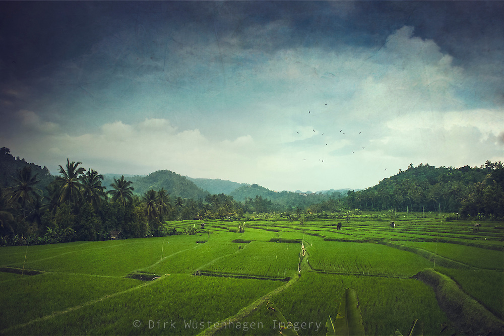 Rice fields on a cloudy day in Central Bali - texturized photograph