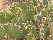Photo of cactus in Zion National Park on June 12, 2005 in Springdale, Utah. ©Paul Anthony Spinelli