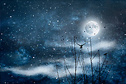 Full moon night with birds, mist and stars. Composite image<br /> REDBUBBLE prints &amp; more: http://rdbl.co/2D0gODg<br /> Society6 prints: http://bit.ly/2ErNCS3
