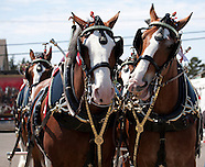Clydesdales, World Famous